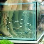 Instituts de beauté : faut-il encore proposer la « fish pédicure » ?